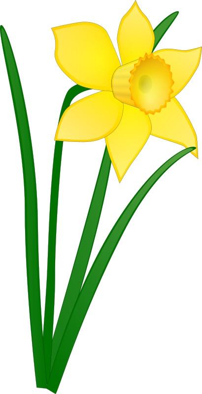 daffodil-jonathan-dietri-01-800px.jpg