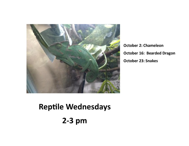Reptile Wednesdays.jpg